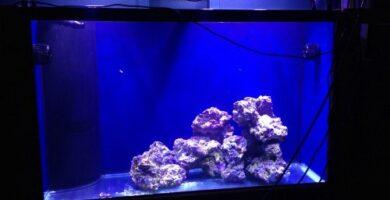 acuario marino casero