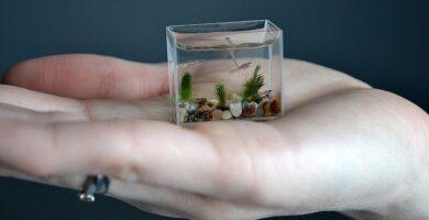 acuario mas pequeño del mundo palma mano