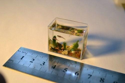 acuario mas pequeño del mundo tamaño