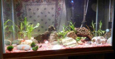 montar acuario casero en casa