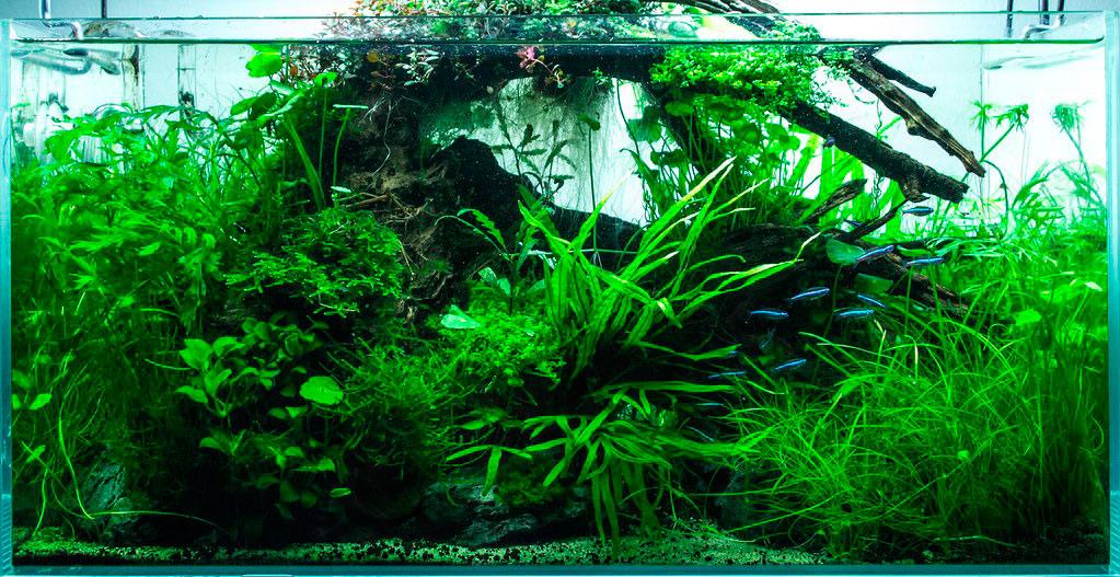 aquascaping nano acuario tipo jungla