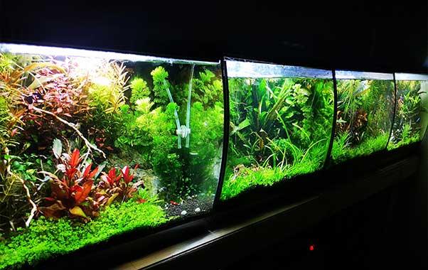 acuarios-y-peceras-nano-acuario-fluval-flex