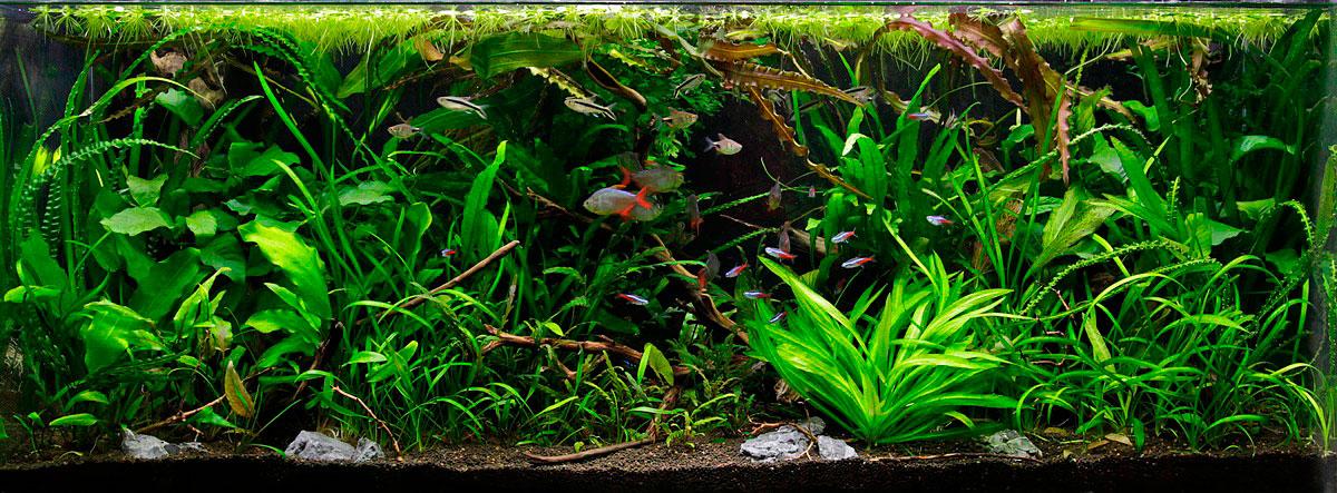 aquascaping para nano acuarios variedad plantas acuario plantado