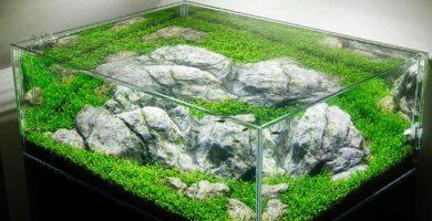 como plantar un nano acuario facilmente