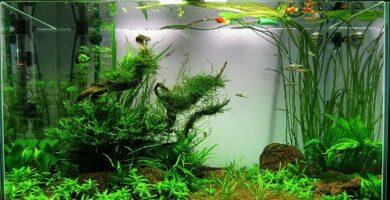 decoracion acuario pequeño nanoacuario