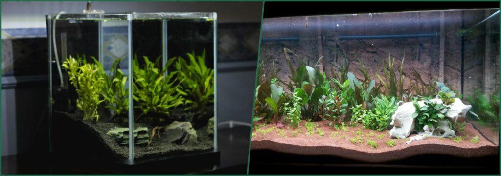 decoracion plantas naturales acuario
