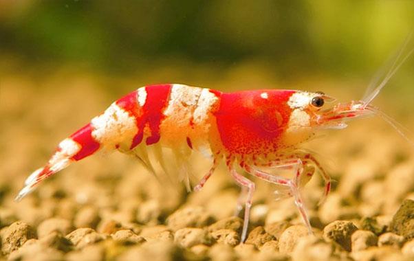 aquascaping nano acuario gambario