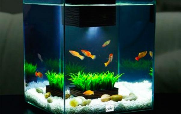 acuarios pequeños comunitario guppy platty