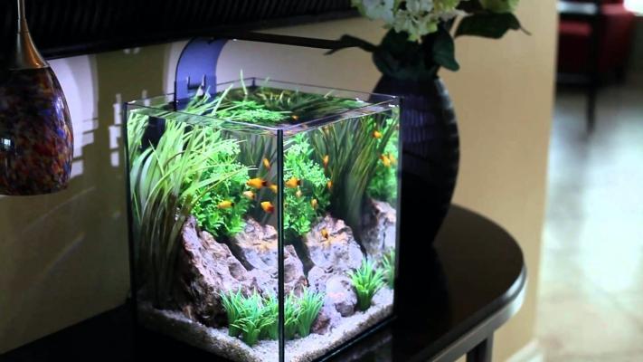 colocar acuario en casa en sitio templado y ventilado