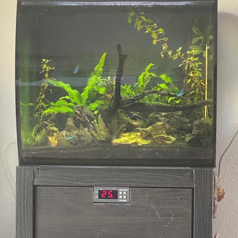 termostato peces agua fria